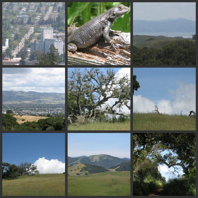 Helen Putnam park collage