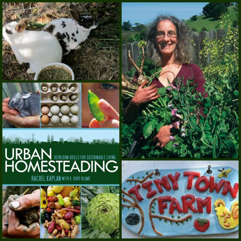 Urban Homesteading collage