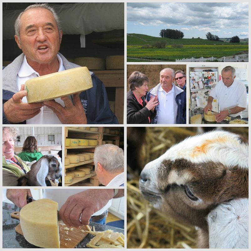 Valley Ford Cheese collage