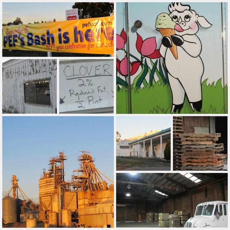 PEF BASH 2012 collage