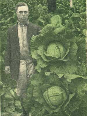 1919cabbage
