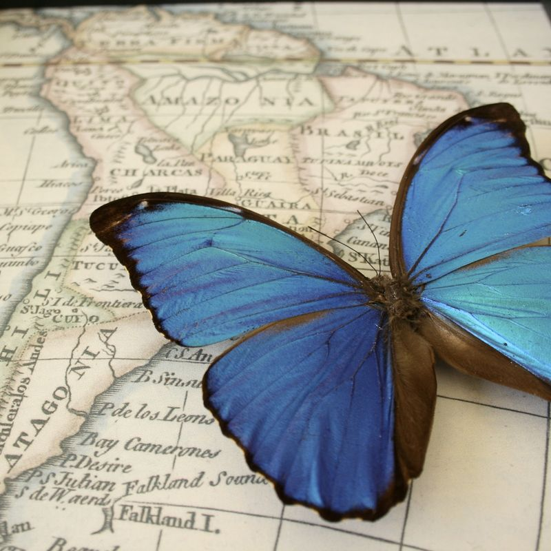 Butterfly-on-map