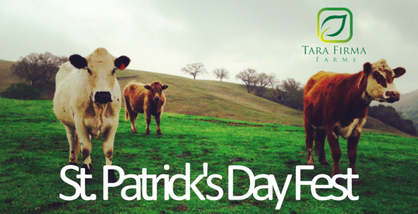 St_Patricks_day_cow_header.1