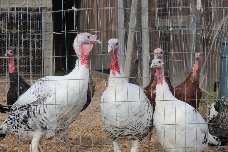 Najiola-Farm (1)