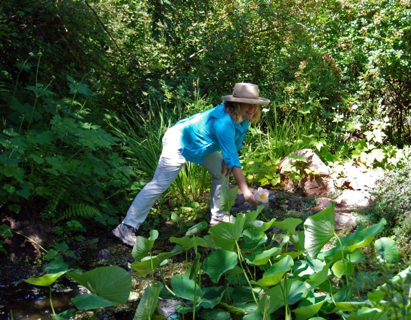 morning walks in the garden a saturday docent led spring series at glen ellens quarryhill botanical garden sonoma countys hidden gem - Quarryhill Botanical Garden
