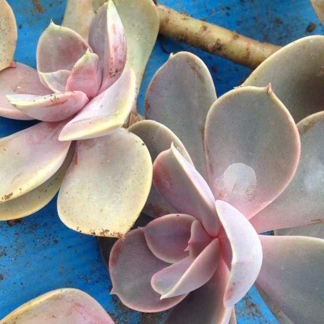 Succulent-workshop@2x