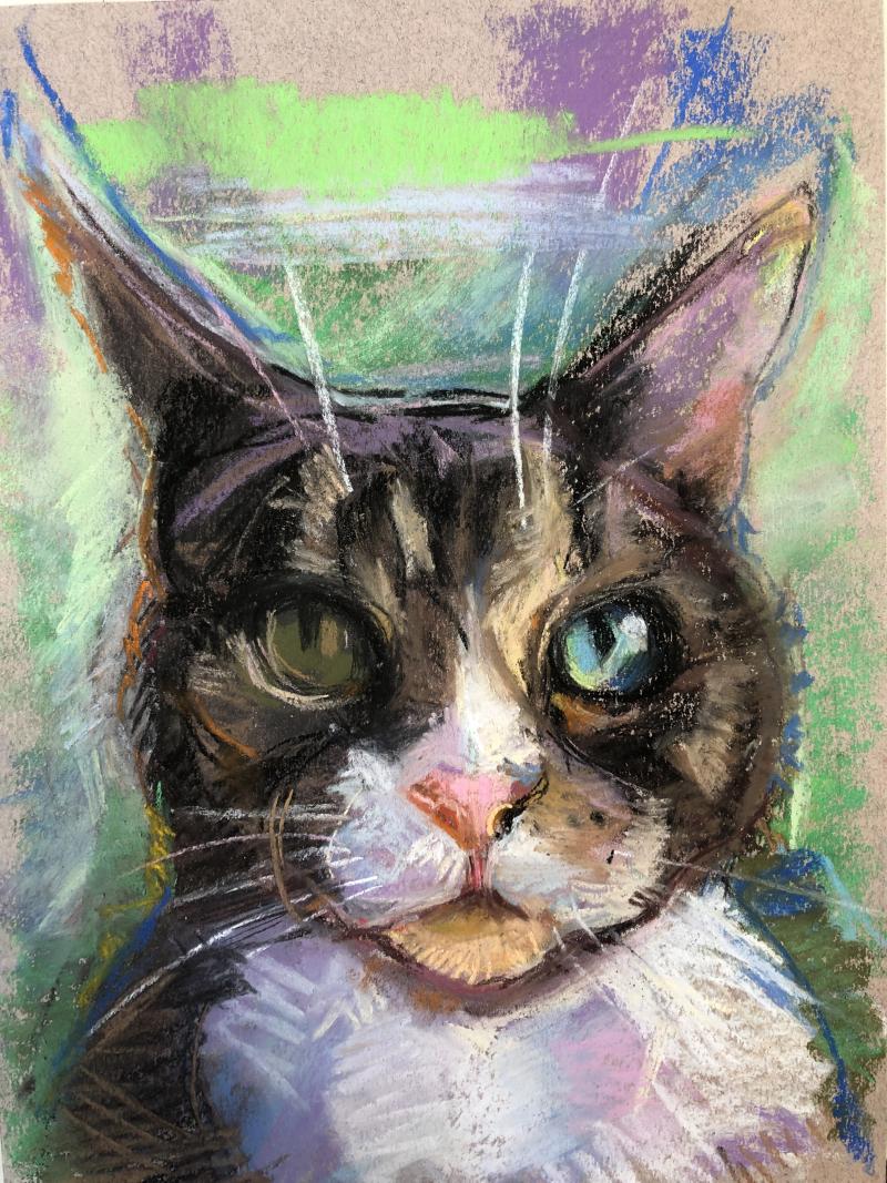 Lisa's-cat